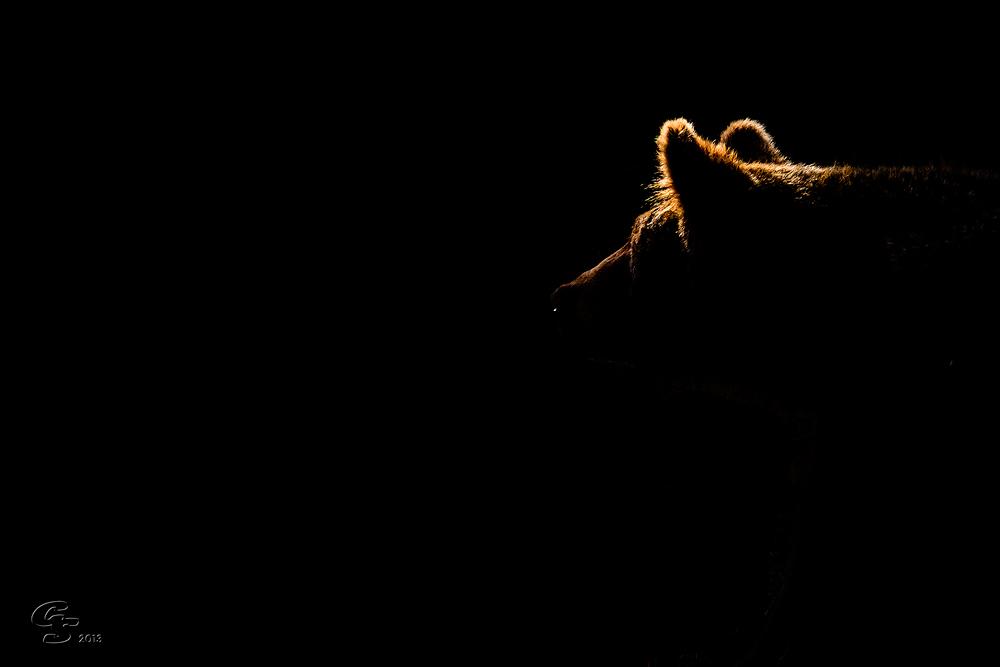 Aus dem Dunkel
