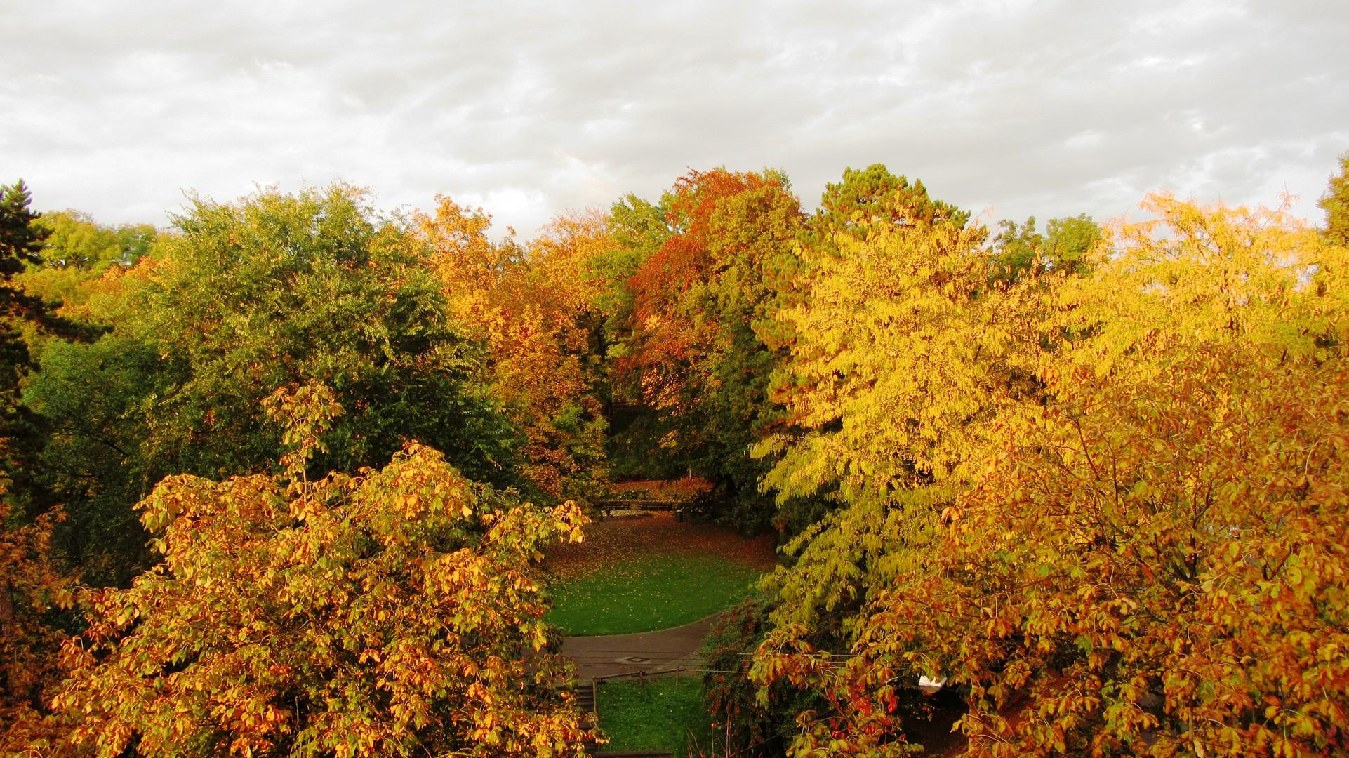 Aus dem Fenster - Herbst