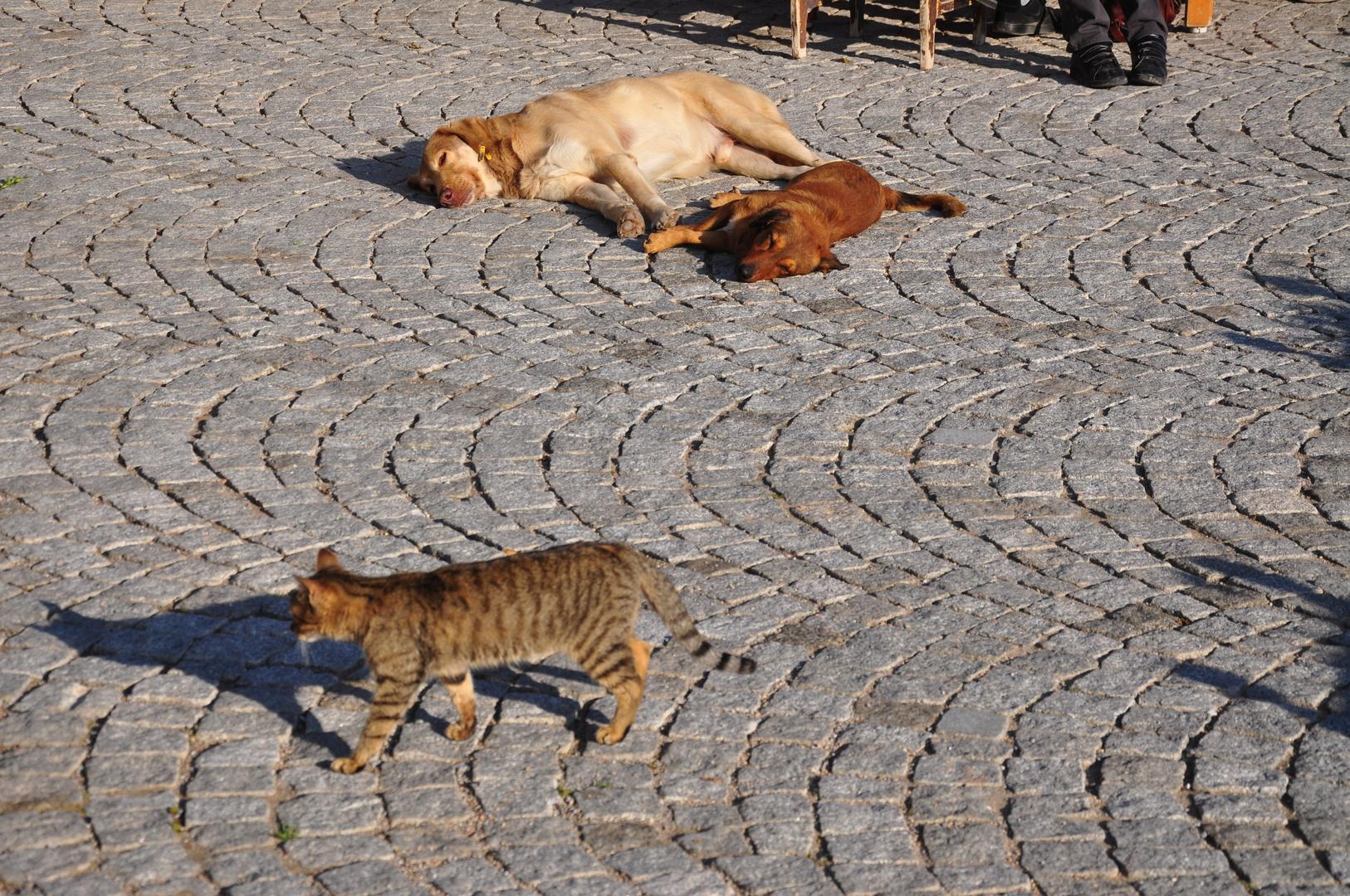 Aus dem Hundeleben - Gute Vorsätze