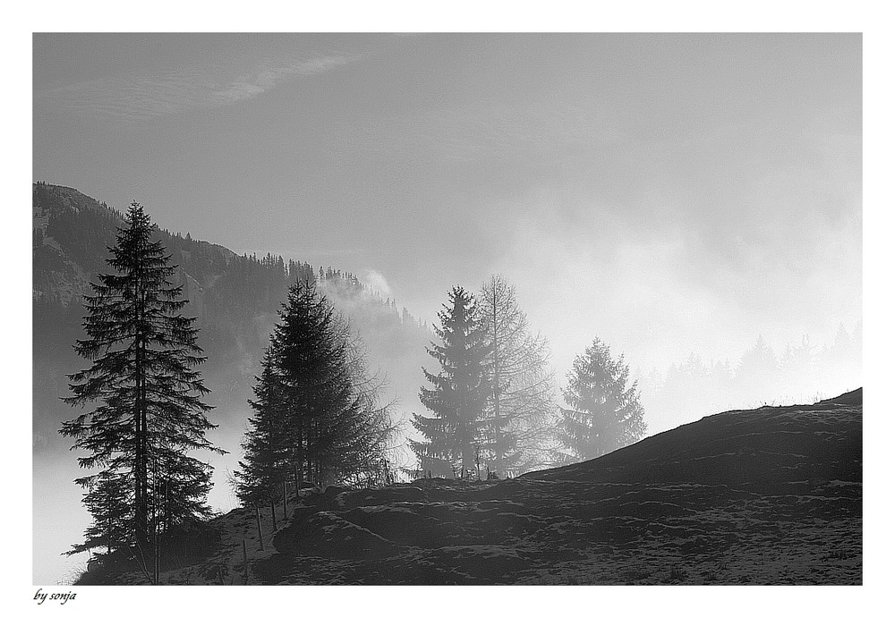 """""""Aus dem Nebel tauchen"""""""