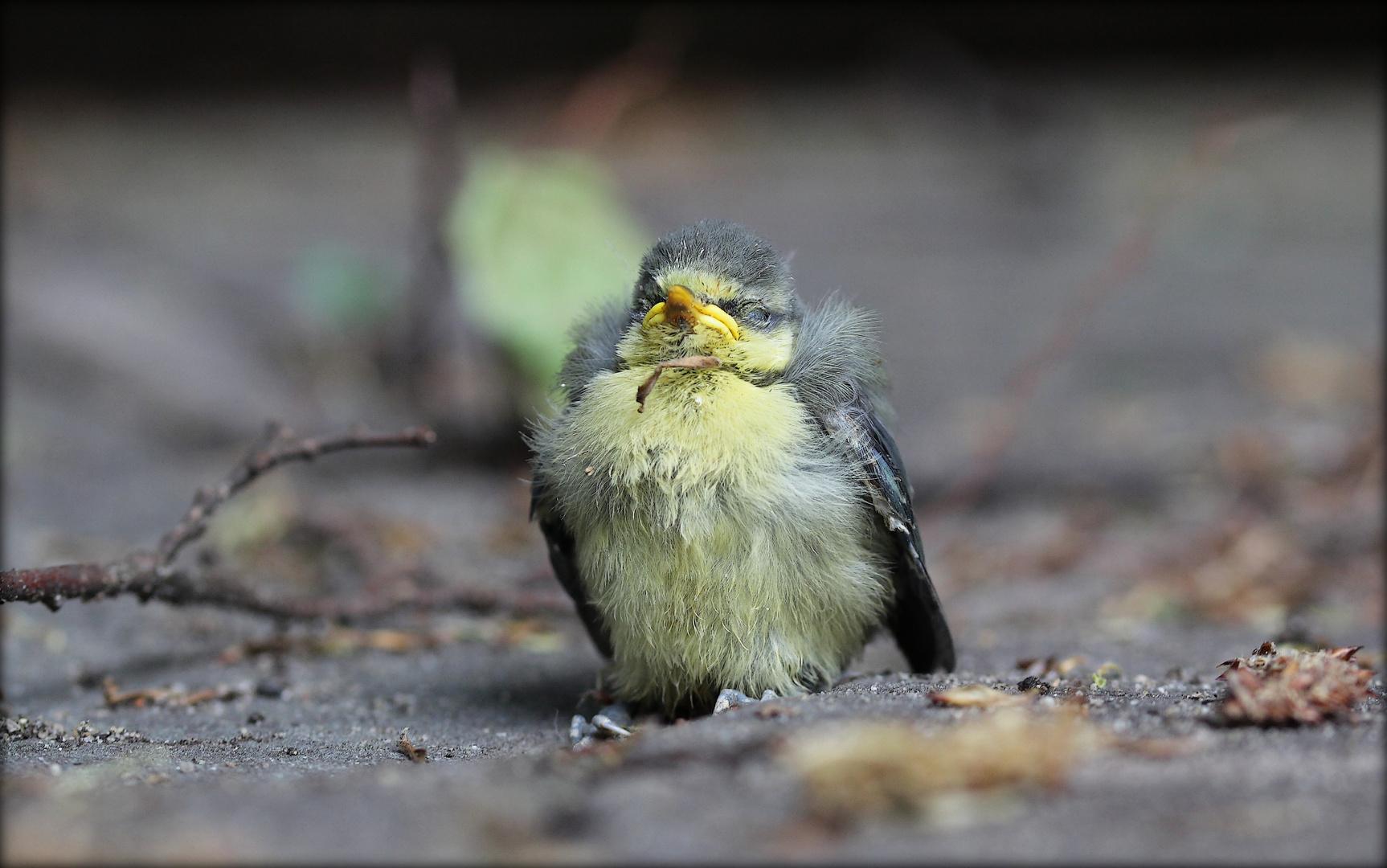 Aus dem Nest gefallen.....
