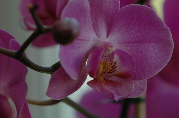 Aus dem Orchideenhaus der Insel Mainau - verschwenderische Schönheiten
