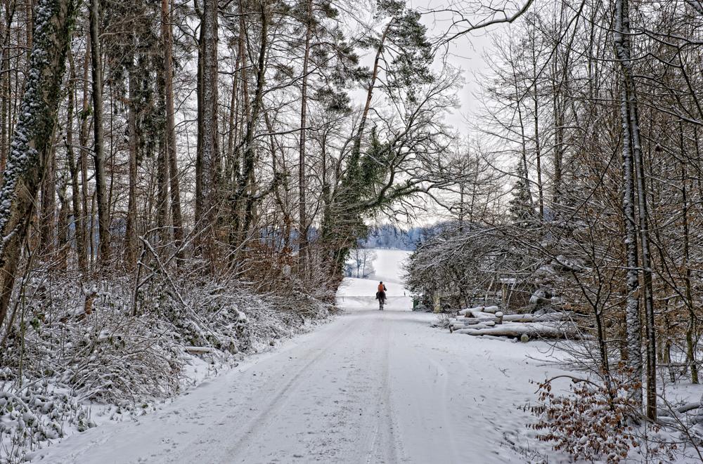 Aus dem Wald - Ritt