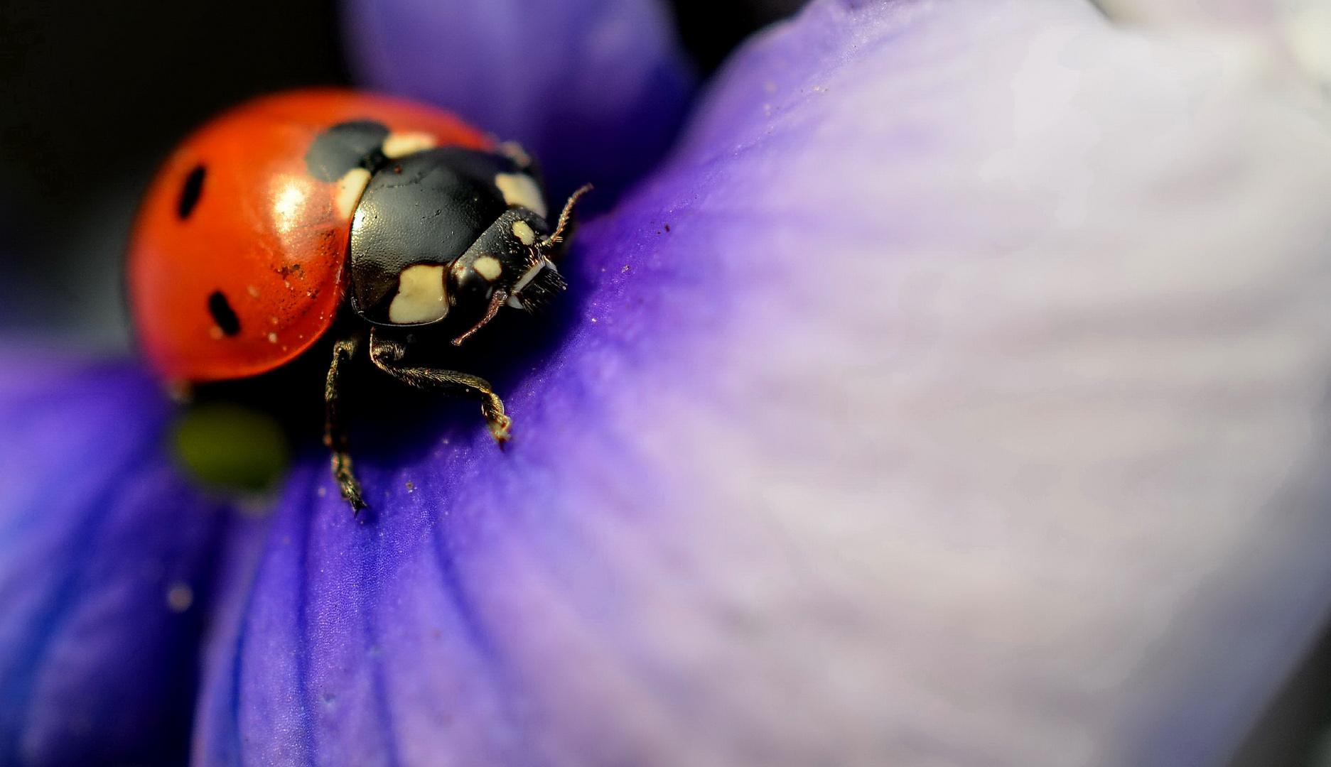 Aus den Tiefen der Blüte