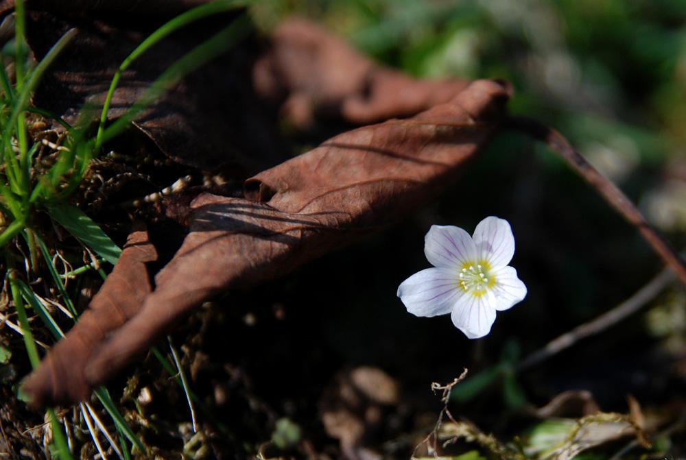 Aus der braunen Erde kriecht der Frühling hervor