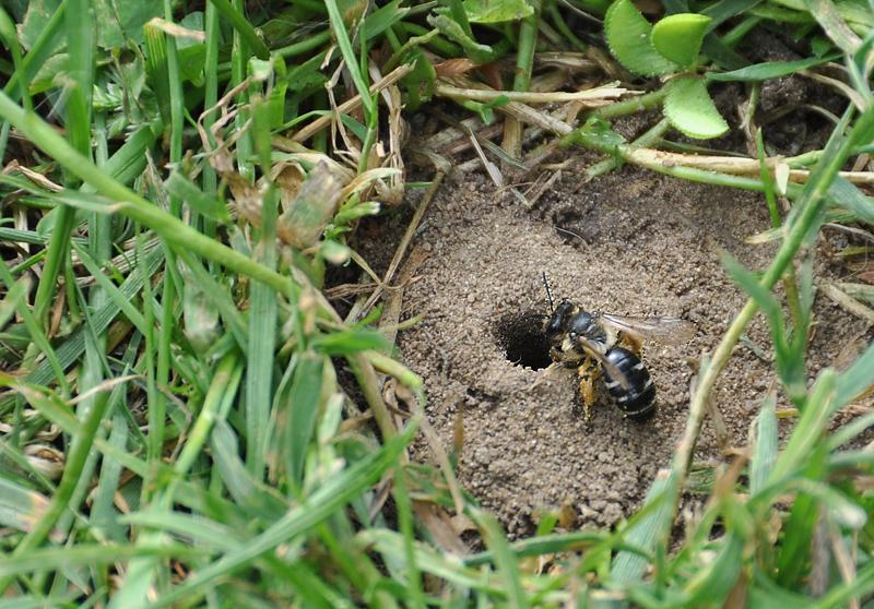 aus der erde 01 foto bild tiere wildlife insekten bilder auf fotocommunity. Black Bedroom Furniture Sets. Home Design Ideas