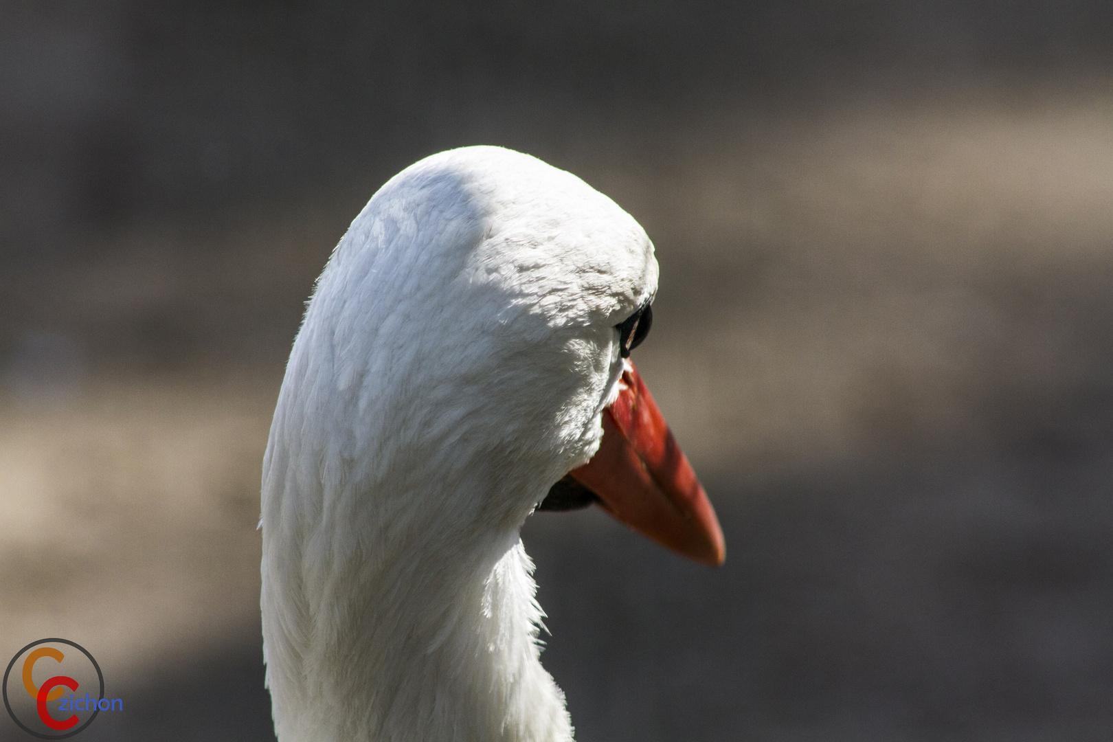 Aus der Perspektive eines Storches...