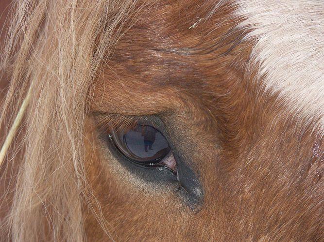 Aus der Sicht des Pferdes