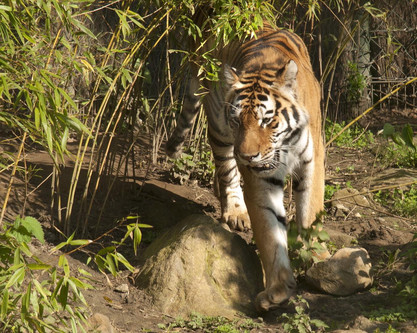 Aus der Tierwelt Asiens