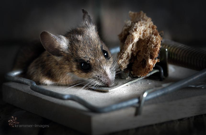 Aus - die Maus ...