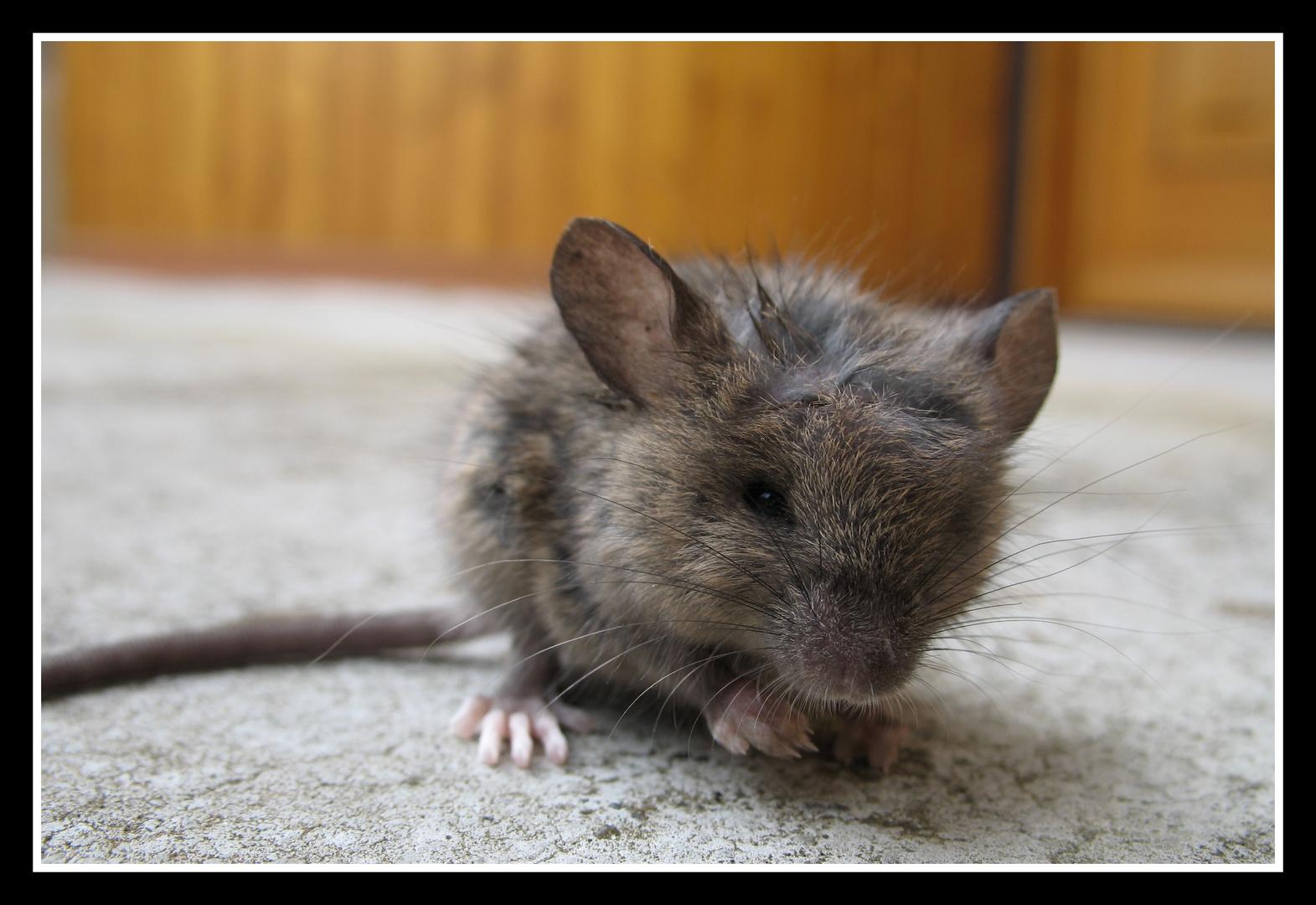 aus die Maus (nachdem die Katze kam)