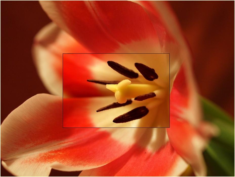 aus einer Blume ein Makro machen
