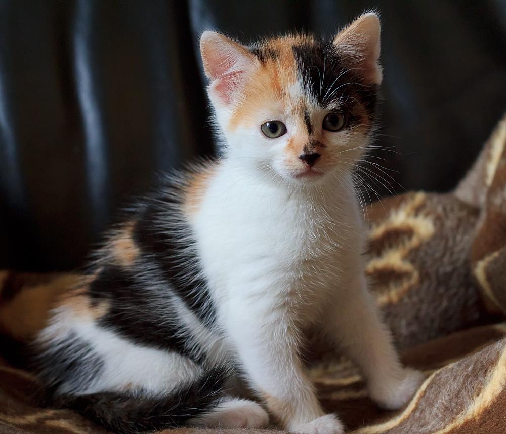 Aus einer Katzenfamilie 3