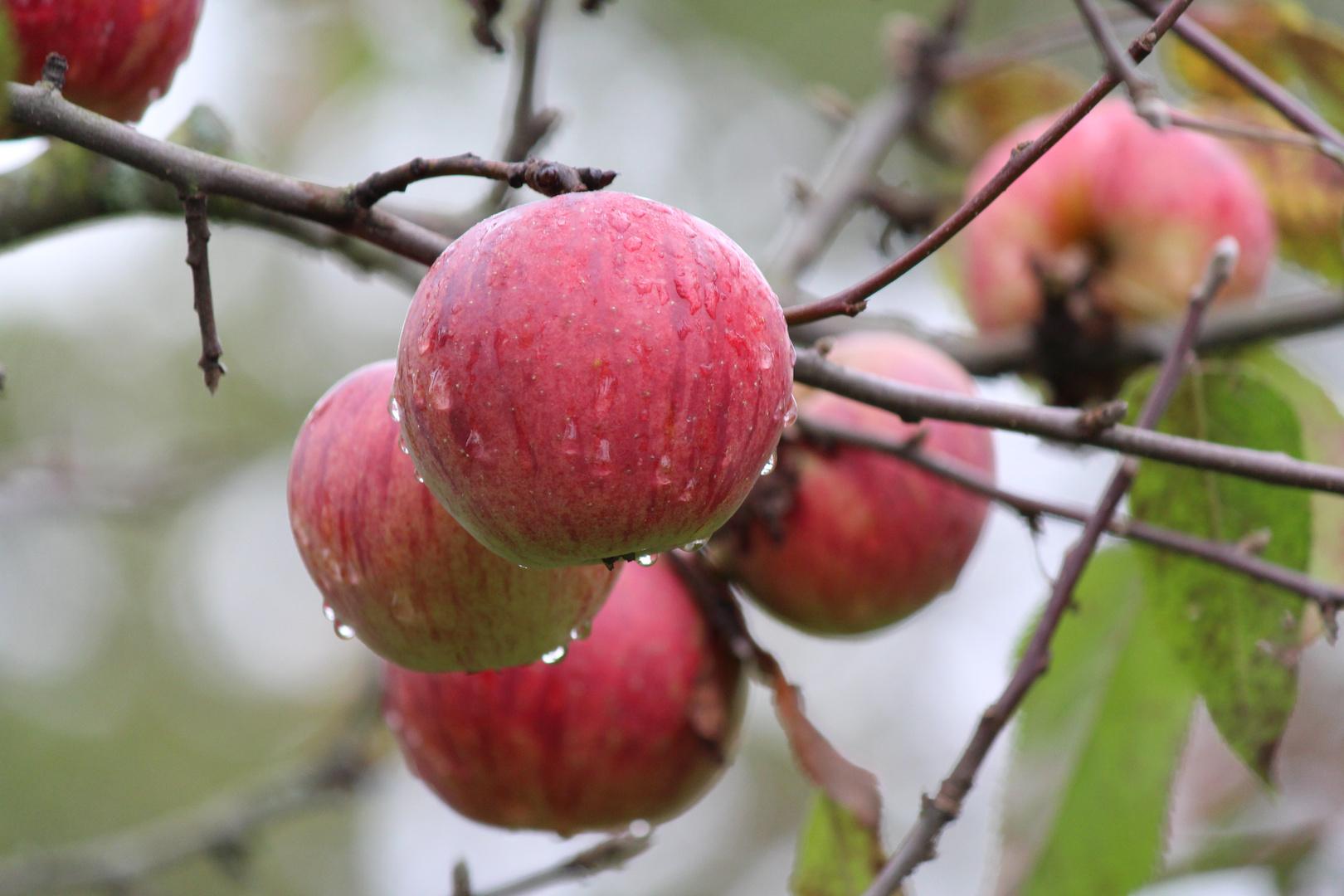 aus euch könnte noch guter Äppler werden!