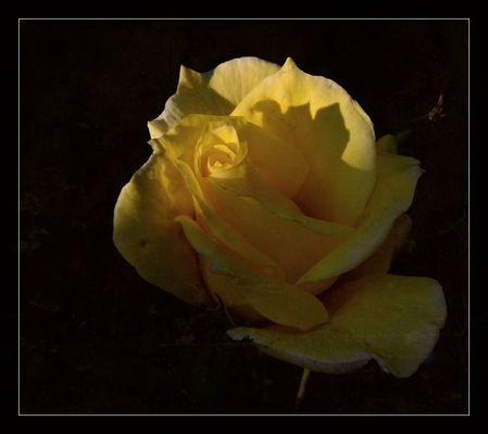 #...Aus meinen Garten......#