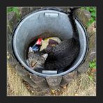 Aus meiner locker fortgeführten Reihe »Tiere in adäquaten Behältnissen« – Das Drecksviech.