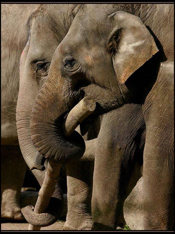 ...aus ´ner Mücke ´nen Elefanten machen!! ;-))