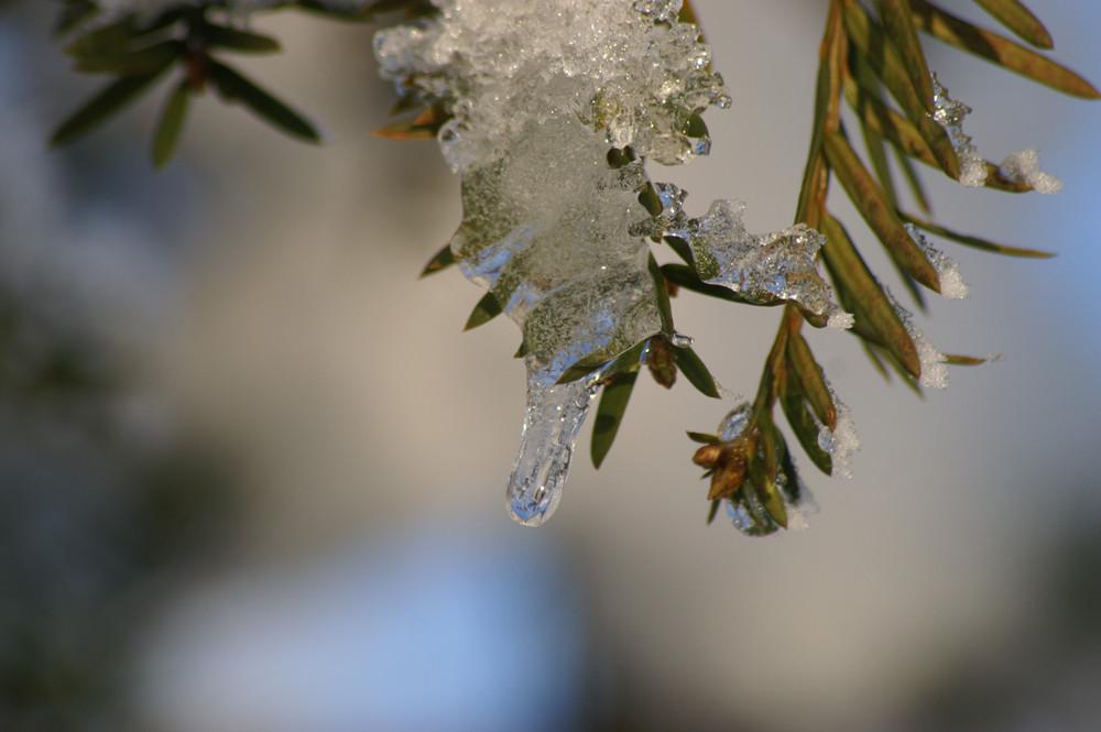 Aus Schnee wird Eis