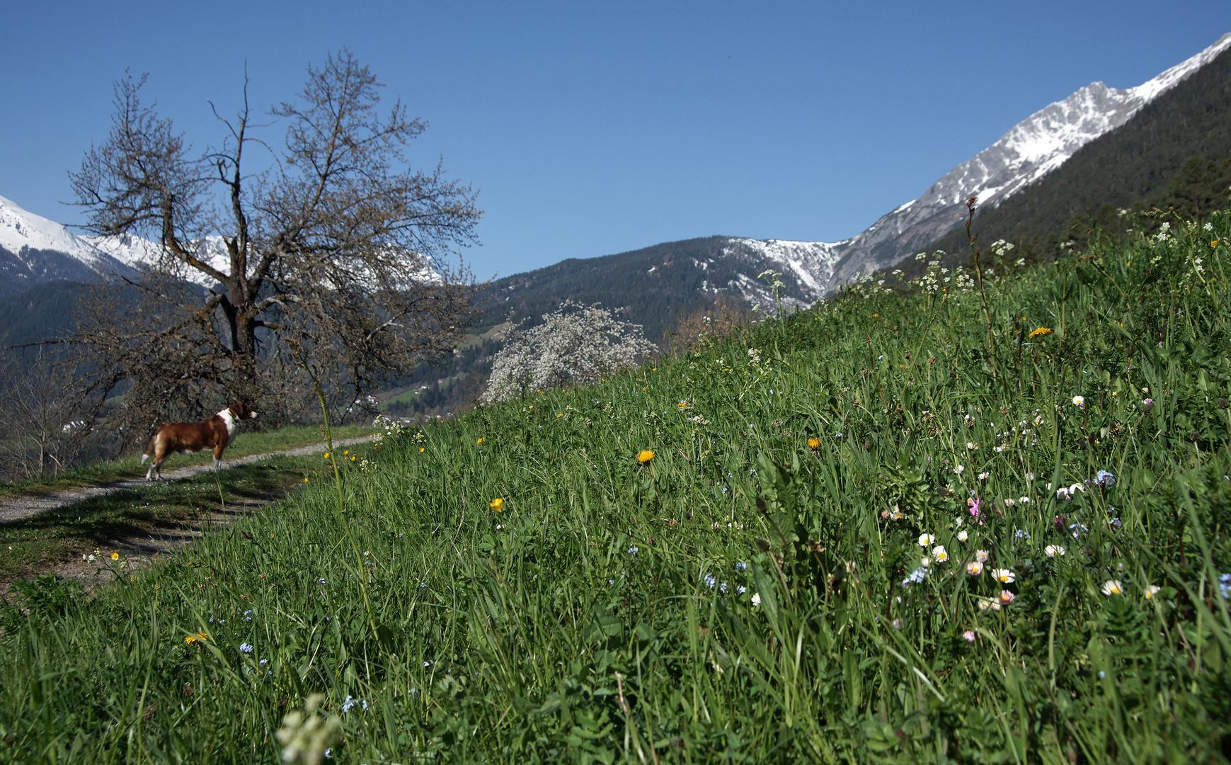 aus Tirol....
