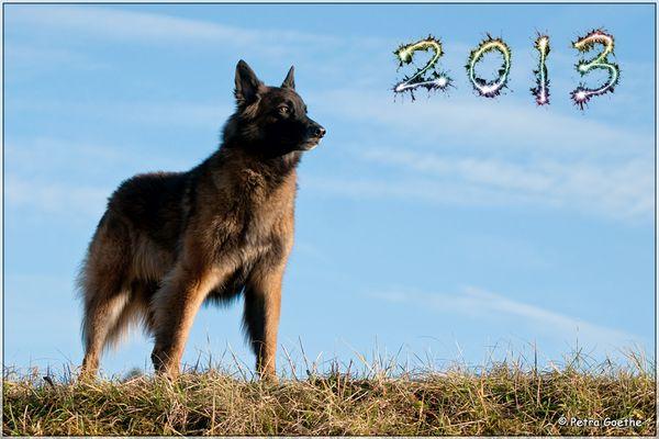 Ausblick auf 2013