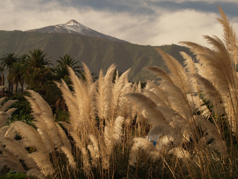 Ausblick auf den Pico del Teide