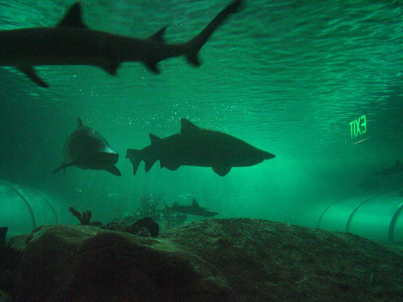 Ausbruchsversuche von Haien