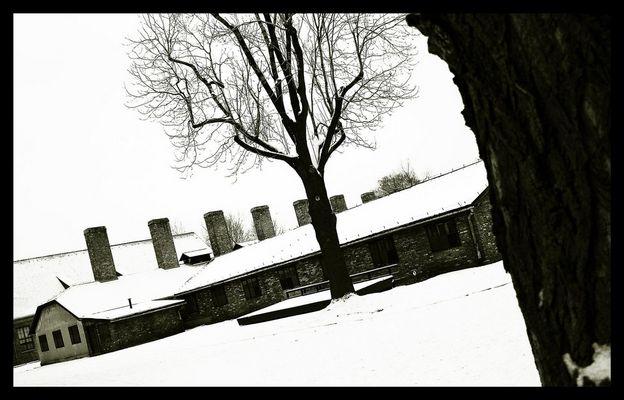 Auschwitz 05