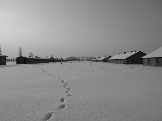 Auschwitz Birkenau (1) - Spuren im Schnee