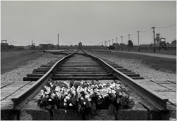 Auschwitz-Birkenau 1940-1945........