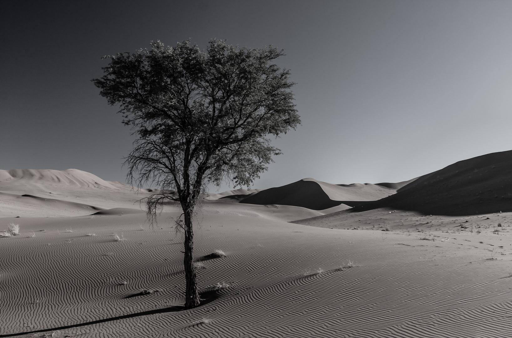 Ausdauer in der Namibwüste