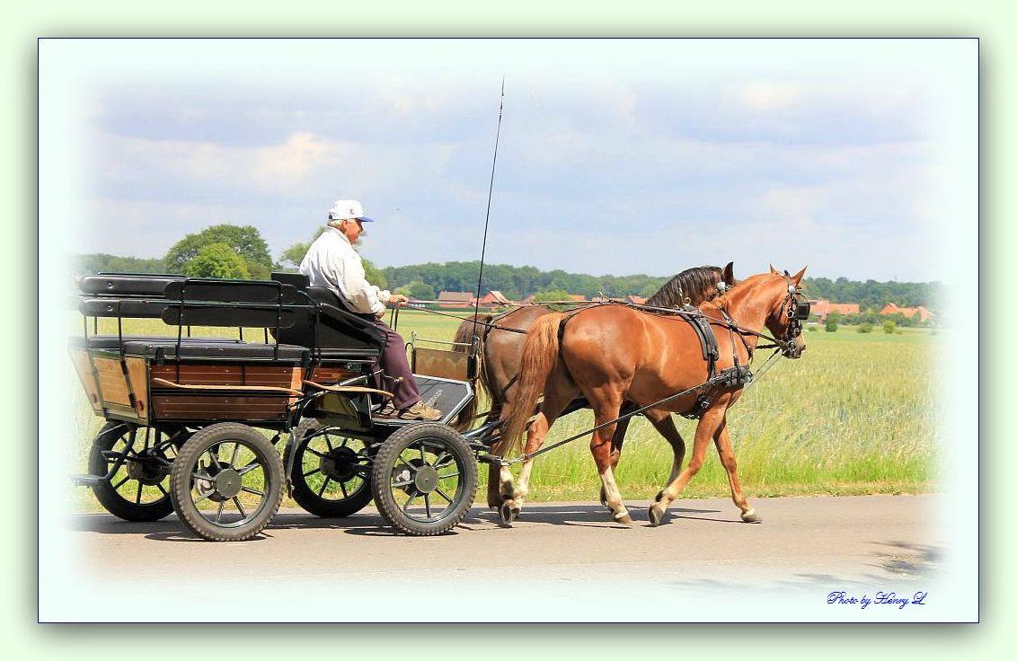 Ausfahrt mit Kutsche