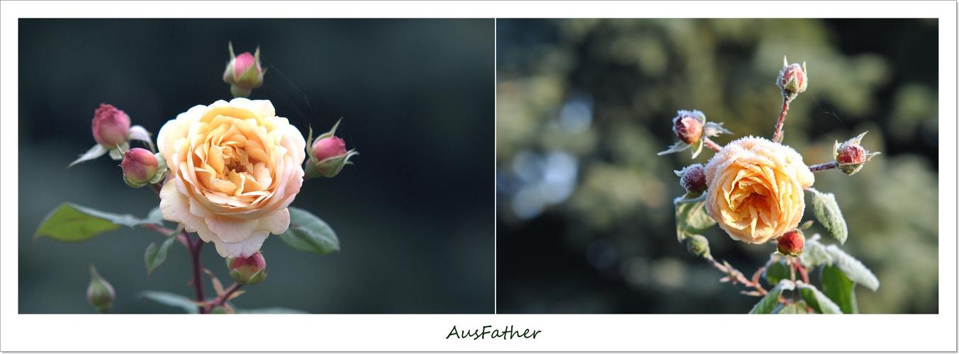 AUSFather