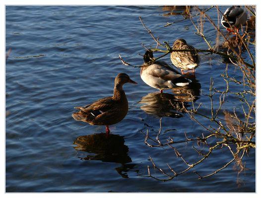 Ausflug am Teich