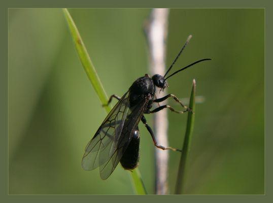 Ausflug der Ameisenkönigin