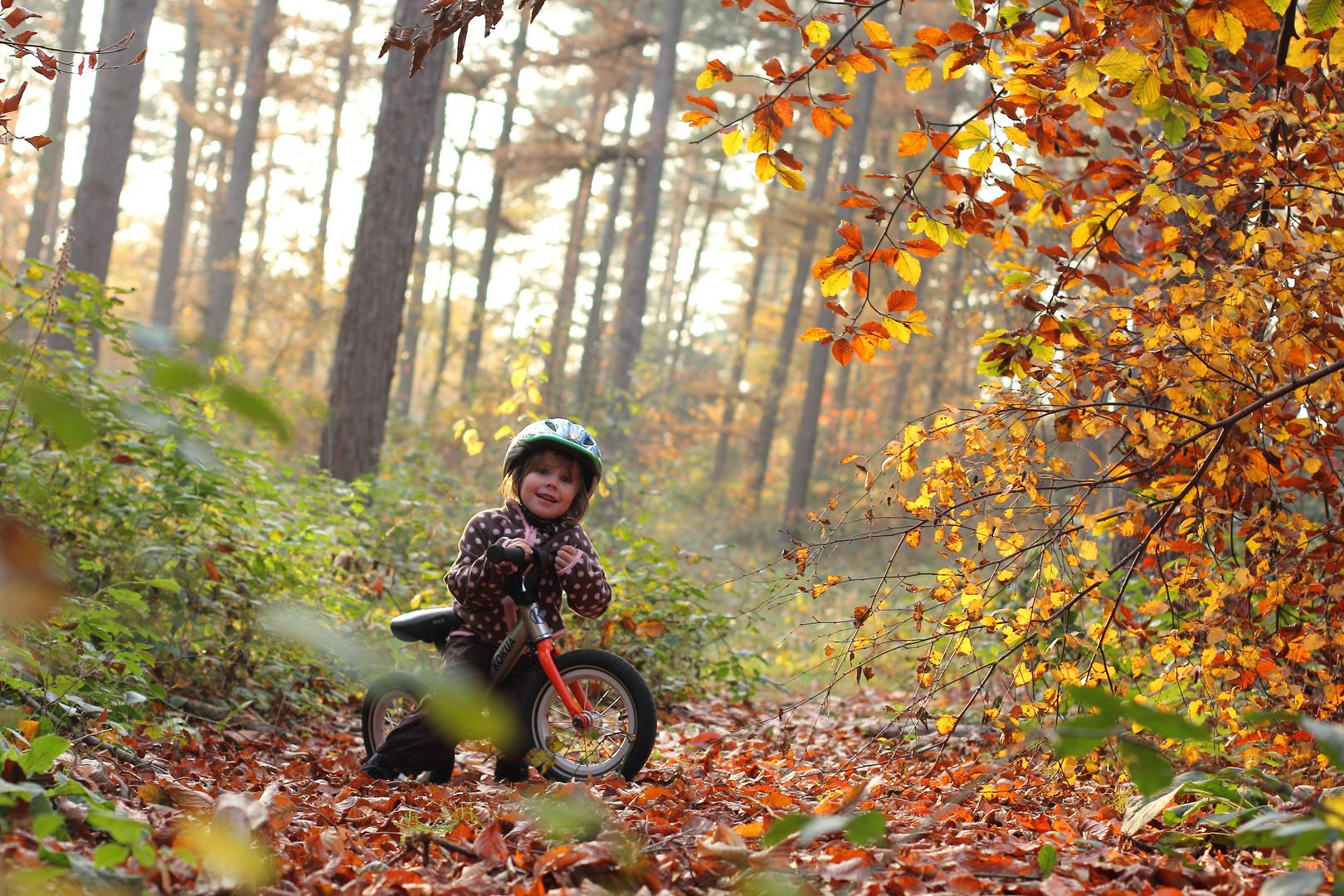 Ausflug in den Herbstwald