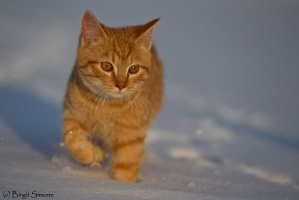 Ausflug in den Schnee!
