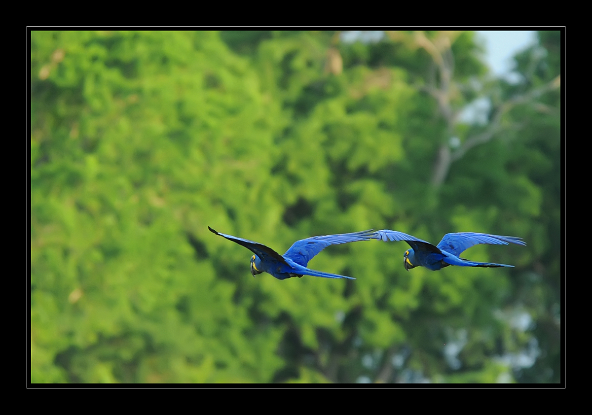Ausflug ins Blaue