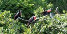 """Ausflug """" Los Haitises Nationalpark"""""""