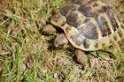 Ausflug Schildkröte