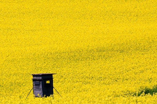 Ausguck ins Gelbe