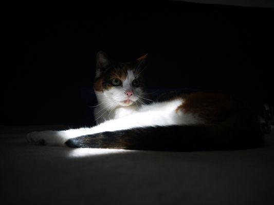 Ausklang eines Sonnenstrahls