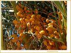 Ausländische Früchte