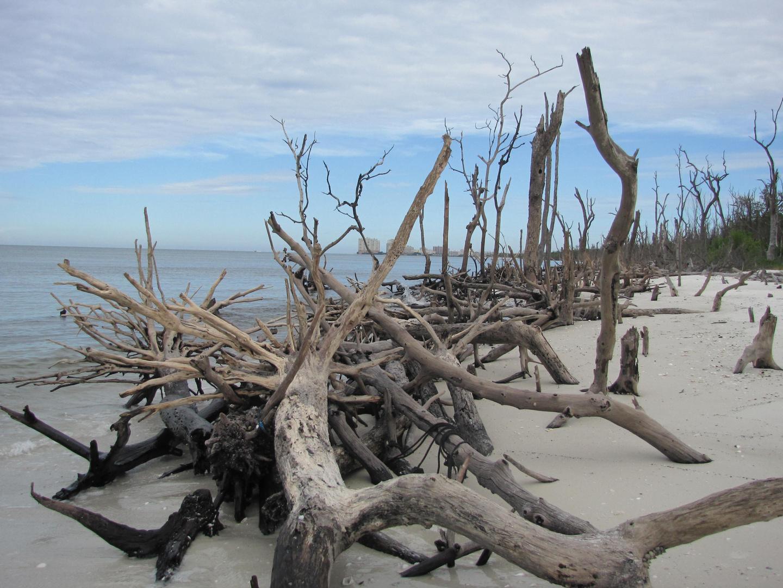 Ausläufer der Everglades
