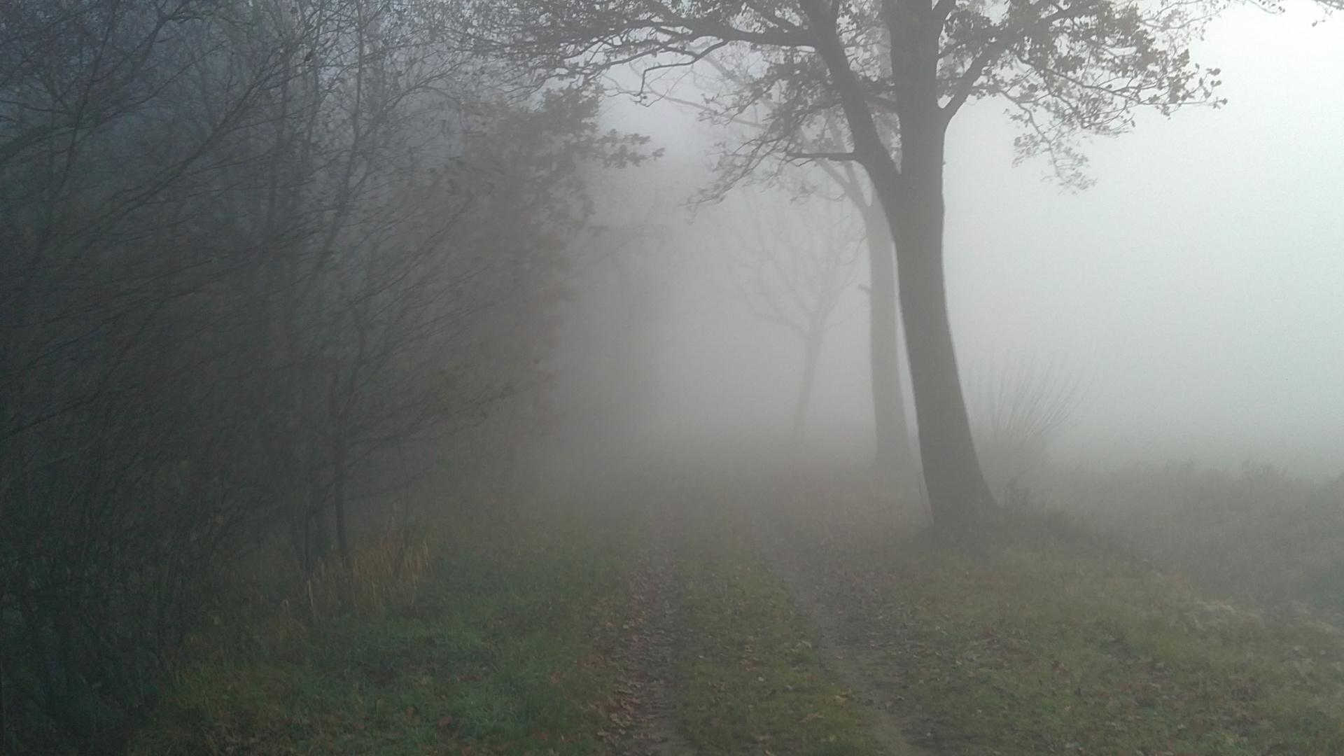Ausritt im Nebel
