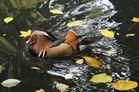 Ausschwimmen im Herbst
