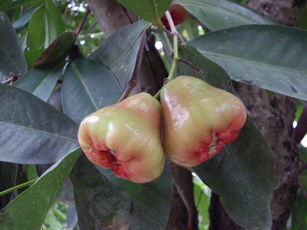 außergewöhnliche Frucht