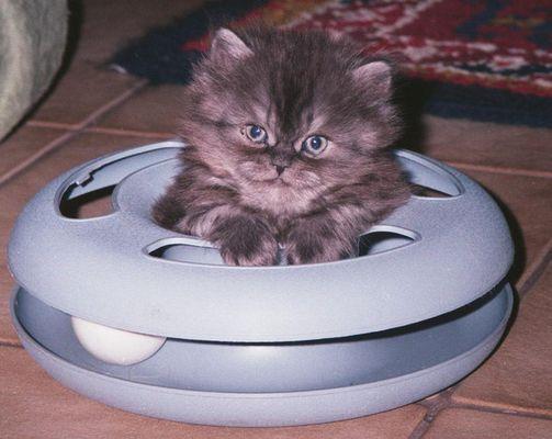 ausserirdische Katze gelandet ...