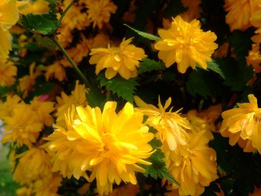 aussi jaune que le soleil