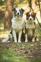 Australian Shepherd | Jeanny & Nele