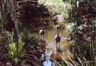 Australian zoo 4